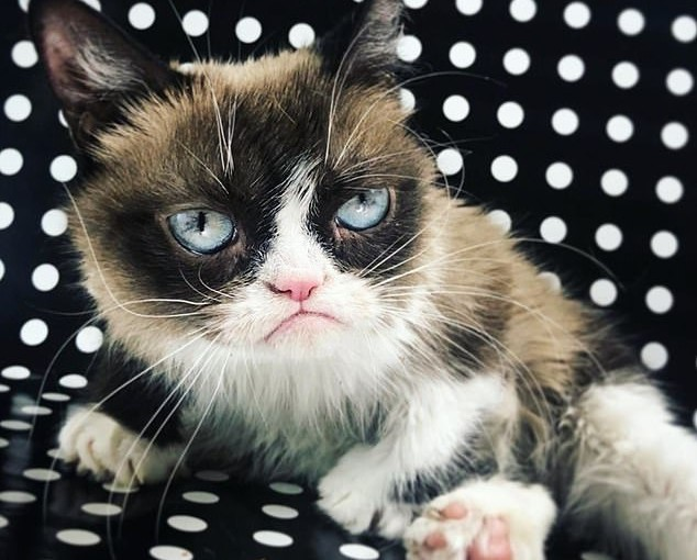 World's Richest Grumpy Cat Dies At The Age Of 7, Leaving Behind Her $100million fortune (photos)
