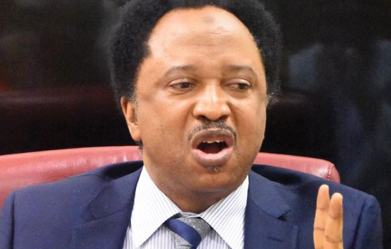 My Hair doesn't need that marijuana you smoke to grow – Shehu Sani blasts Omoyele Sowore