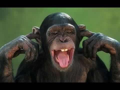 Monkeys Invade Osun Hospital's TraumaCentre