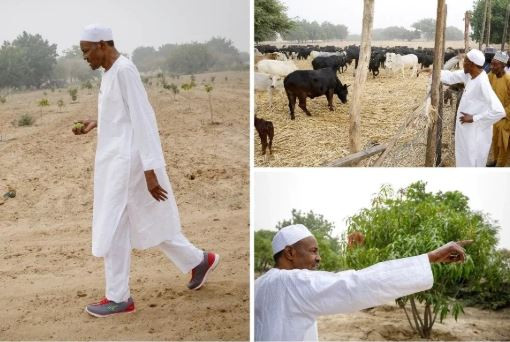 Ruga is for resolving farmers/herders conflicts – FG