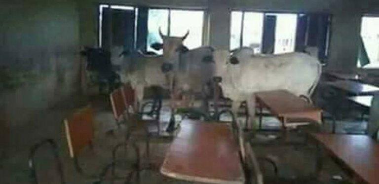 Herdsmen and their cattle invadesFUTO