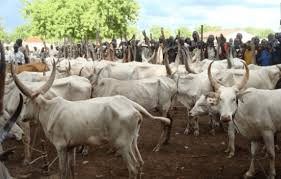 99 Cows, 128 Sheep and 1 Donkey, rescued by the Nigerian police