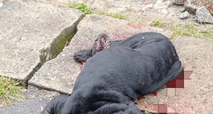Dog Opens A 1-Year-Old Boy's Skull In Abuja (GraphicPhotos)