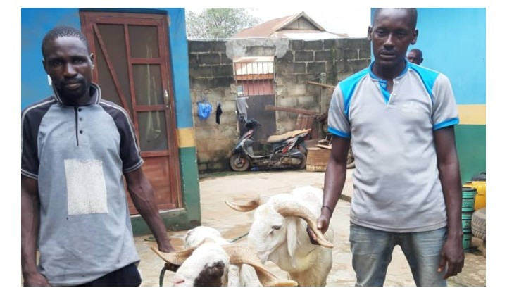 Two men arrested for stealing rams in Ogun state